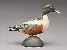 Rare large miniature shoveler drake, Elmer Crowell, East Harwich, Massachusetts.