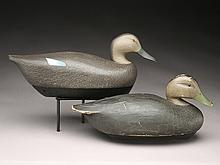 Two black ducks, Ken Harris, Woodville, New York.