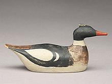 Miniature merganser drake from the South Shore of Long Island, last quarter 19th century.