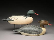 Rare pair of American mergansers, Tony Bianco.