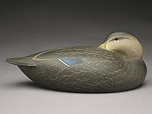 Black duck carved in the style of the Ward Brothers, Oliver Lawson, Crisfield, Maryland.