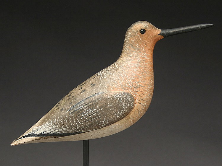 Important dowitcher in summer plumage, John Dilley, Quogue, Long Island, New York, last quarter 19th century.