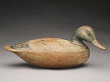 Very rare mallard hen with turned head, Ira Hudson, Chincoteague, Virginia, circa 1930.