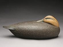 Large black duck, David Ward, Essex, Connecticut.