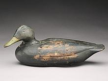 Black duck, Gus Wilson, South Portland, Maine.