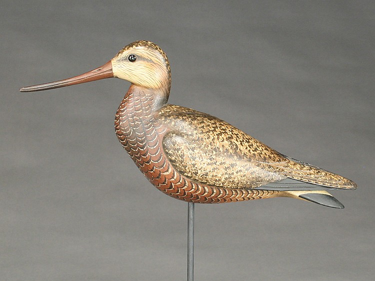 Godwit, William Gibian, Onancock, Virginia.