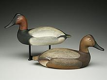 Large pair of canvasbacks, Ward Brothers, Crisfield, Maryland, circa 1960.