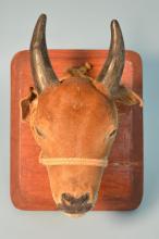 Vintage Mounted Calf Head