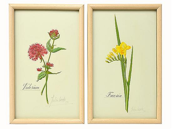 A PAIR OF BOTANICAL DRAWINGS BY THALIA LINCOLN (South African, b. 1924) 2 pieces