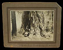 F. Ransome Cabinet Card Photograph, Muir Woods, California Redwoods