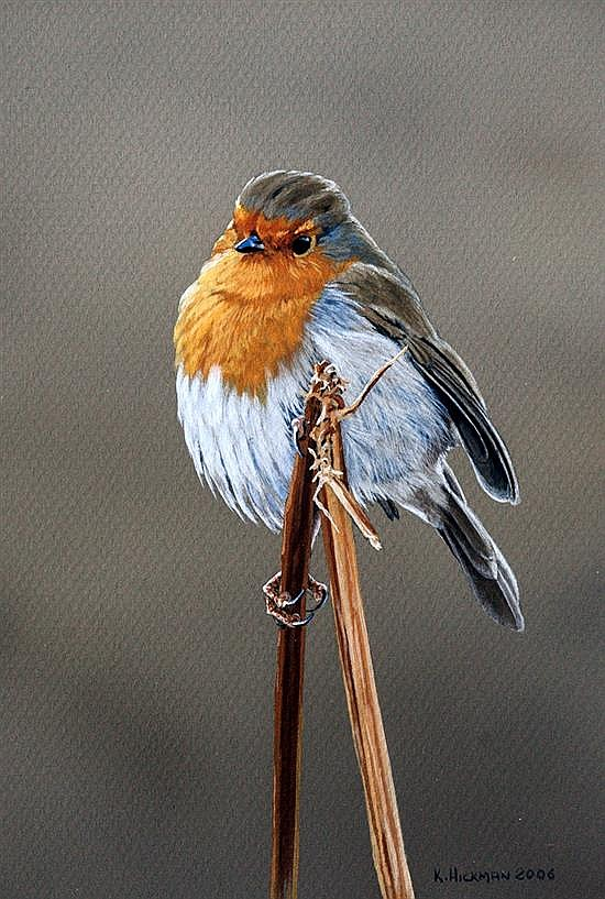 Kevin Hickman (Guernsey, b.1957) Study of a Robin perched upon a broken stem of bracken