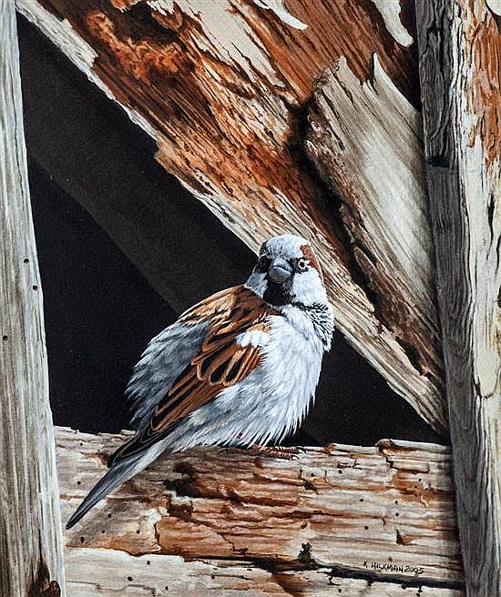 Kevin Hickman (Guernsey, b.1957) A study of a House Sparrow in the rafters of an old barn