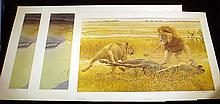 3 Pc. Like New BIG CATS FINE ART PRINTS Limited Edition Lithographs Nature Safari Game Prints Robert Bateman Lions Africa Siberian Tiger