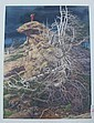 BEVERLY (BEV) DOOLITTLE COLOR LITHOGRAPH