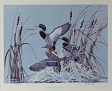 JOHN POAGE MACLEOD MALLARDS AND CATTAILS along with four other prints Print: 14 x 18 1/2 in.