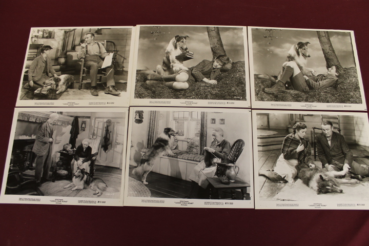 6 Movie Still Photos - Lassie Come Home 8x10
