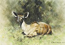 § DAVID SHEPHERD born 1931 Kudu Calf 1968 oil on canvas