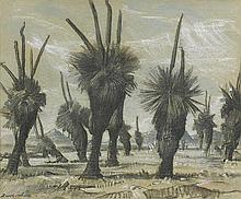 HANS HEYSEN 1877-1968 Blackboys (Xanthorrhoea) (1931) charcoal and chalk on paper