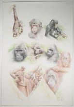 Apes By Original Artist Joel Iskowitz  - Color pencil and aquarelle on board