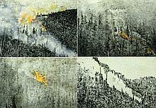 Gal Weinstein b. 1970 - Lot of 4 drawings: Forest