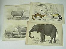 Natural history prints, a large collection, comprising