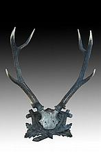 Antique French set of wall mountable deer antlers