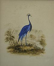 East African School 19th Century Blue Crane; Kavorondo Crane