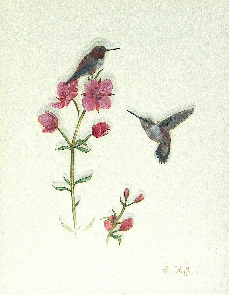 Luke Raffin Hummingbirds