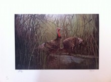 Pair of Wild Turkey's, by Jerry Yarnell
